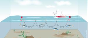 Technique de pêche la ligne ou la palangre